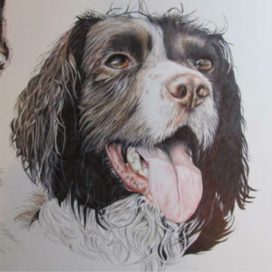 dog pet portrait niki firmin